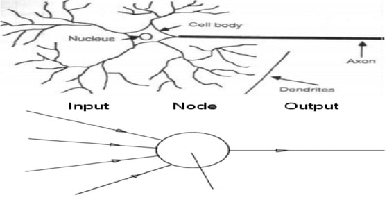 Neurons Vs Node